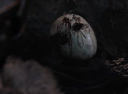 Dark Souls 2 Total Lore and Location Breakdown