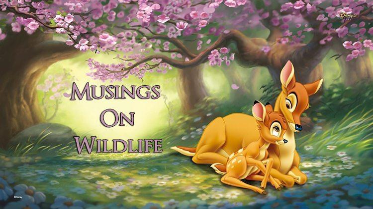Musings on Wildlife