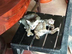amansara-review-bento-cats