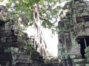 angkor-wat-ta-prohm-perfect-gamer-holiday-bees