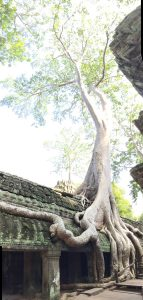 angkor-wat-ta-prohm-perfect-gamer-holiday-tomb-raider-giant-tree