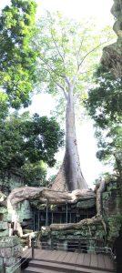 angkor-wat-ta-prohm-perfect-gamer-holiday-tomb-raider-phython