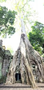 angkor-wat-ta-prohm-perfect-gamer-holiday-tomb-raider-tree-2