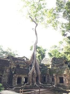 angkor-wat-ta-prohm-perfect-gamer-holiday-tomb-raider-tree