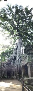 angkor-wat-ta-prohm-perfect-gamer-holiday-tomb-raider-web-tree
