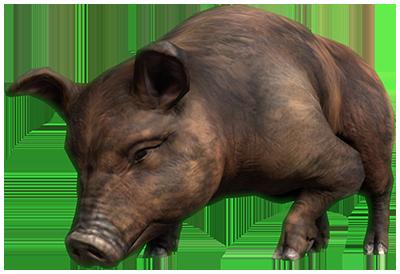 eso-bristlegut-pig
